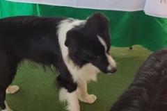 sporting_dog_giugno_19_106