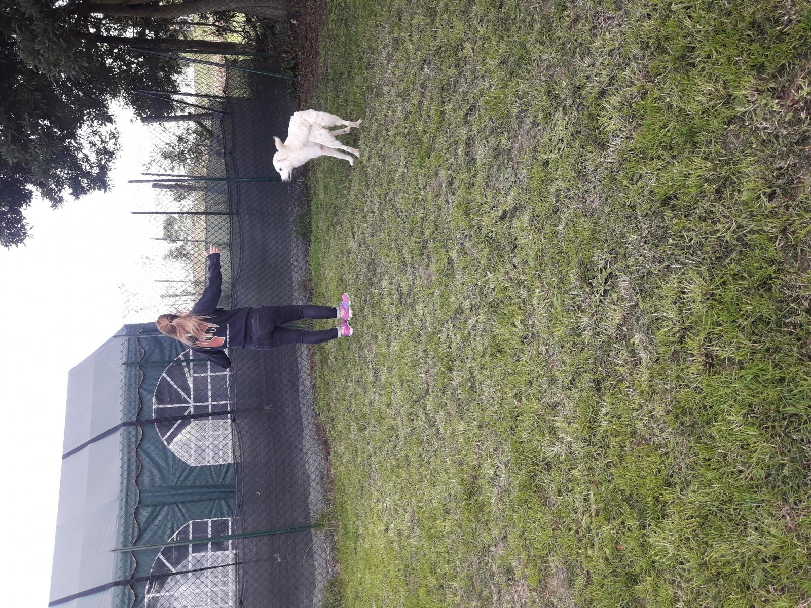sporting_dog_107